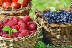 Gartenzauber | Gartentipps im Juli: Nutzgarten - Gartenzauber