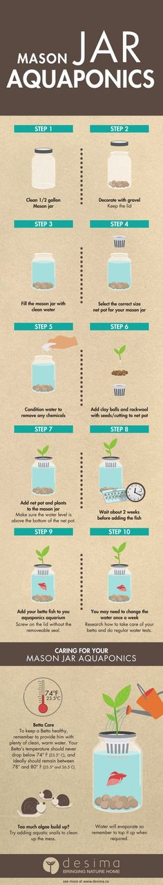 Mason Jar Aquaponics DIY: