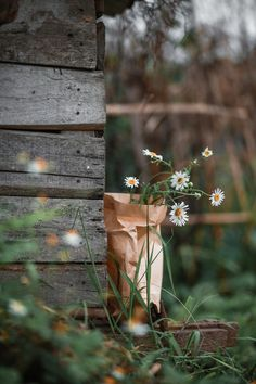 Explore amazing art and photography and share your own visual inspiration! Wild Flowers, Beautiful Flowers, Beautiful Pictures, Daisy, Flora Und Fauna, Flower Aesthetic, Belle Photo, Aesthetic Pictures, Aesthetic Wallpapers