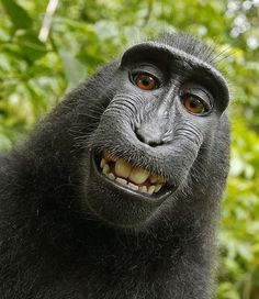Monkey time! - Animal Selfies That'll Make You Die - Photos