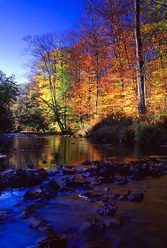 So gorgeous! Allegheny National Forest