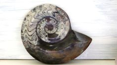 Polished Ammonite Plaque Morocco by BrittanyArmor on Etsy, €49.00