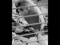 Horror Bird Rosemary's Baby, Horror, Bird, Artwork, Youtube, Work Of Art, Auguste Rodin Artwork, Birds, Artworks