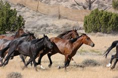 The Bureau of Land Management will be holding a public hearing in Billings in a couple of weeks on the use of motorized vehicles in managing wild horses