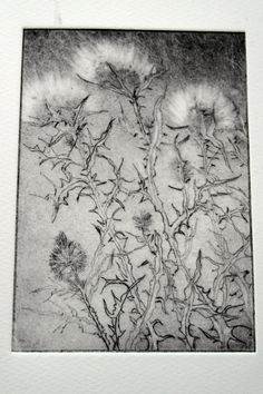 Thistle Seed Heads. Sarah Moss. Drypoint Thistle Seed, Flower Pictures, Botanical Illustration, Dried Flowers, Printmaking, Graphic Art, Seeds, Tapestry, Grasses