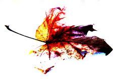 кленовый лист (фотошоп)