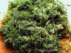 Cum se inmulteste fuchsia (cercelusul) - magazinul de acasă Herbs, Food, Essen, Herb, Meals, Yemek, Eten, Medicinal Plants