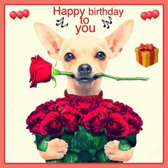 Funny happy birthday pictures for her greeting card 57 Ideas for 2019 Funny Happy Birthday Pictures, Happy Birthday Funny, Happy Birthday Quotes, Happy Birthday Greetings, Birthday Messages, Happy Valentines Day, Funny Pictures, Birthday Blessings, Happy B Day