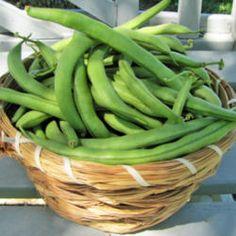 Bush & Pole Bean Varieties