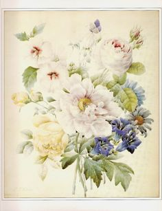 REDOUTE Vintage 1990 Art Print Botanical Original Book Plate 126 Beautiful Antique French Roses White Pink Purple and Yellow Garden Flowers