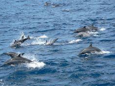 dolphin @Yana Kuzin-Ilan, #Taiwan