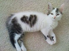Kitten with a ♥