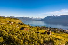 A brief ride from Lausanne in the heart of Lavaux is Domaine Croix Duplex. Lake Geneva, Lugano, Lausanne, Types Of Soil, Lisbon, The Locals, Around The Worlds, Tours, Travel
