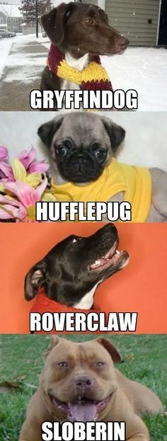 Funny pictures about Harry Potter Dog Houses. Oh, and cool pics about Harry Potter Dog Houses. Also, Harry Potter Dog Houses. Funny Dog Memes, Funny Animal Memes, Funny Animal Pictures, Funny Dogs, Funny Animals, Cute Animals, Memes Humor, Funny Quotes, Dog Pictures