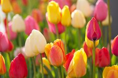 need to plant these. beautiful colors #flowers