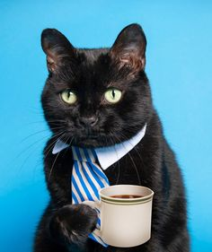 """Just like black dogs, black cats can also have a hard time getting adopted. Many shelters refer to this as """"black cat syndrome."""" All About Cats, Hard Times, Adoption, Black Dogs, Shelters, Animals, Tough Times, Foster Care Adoption, Animales"""