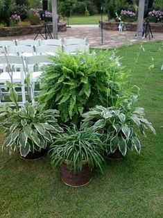 A simple arrangement that can be grown months before the wedding in your own back yard. Another low budget idea for the DIY bride.