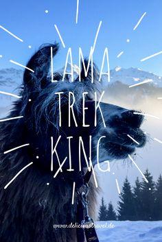 Lama-Trekking ist eine ganz andere Art zu wandern, sehr friedlich, fast schon meditativ.