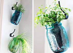 Arranging aromatic herbs at home: 20 DIY ideas to inspire