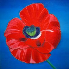 Poppy painting picture in pastel pencil, by Sara Bowles Art 2014