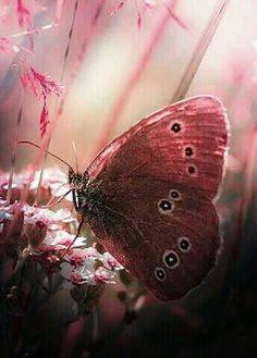 Lady in Red Butterfly.