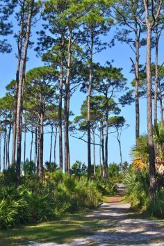 St. Joseph Peninsula State Park in Florida. has miles of white sand and superb views of dunes.