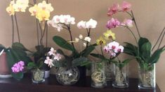 grow orchids in water Orchids In Water, Glass Vase, Bloom, Gardening, Flowers, Image, Google Search, Culture, Ideas