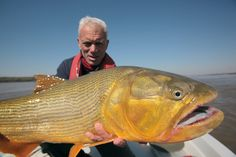 Jeremy Wade with 43 pound Golden Dorado caught by the Salto Grande Dam on the Uruguay River, border between Argentina and Uruguay. -  Image Credit: DCL