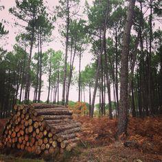 Promenade dans la forêt des Landes de Gascogne  www.guide-des-landes.com