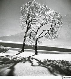 """Alfred Eisenstaedt / """"Trees in Snow, St. Moritz"""", 1947"""