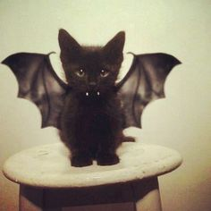 Creepy Cuteness, don't forget the stuffed toy option to make this little bat, etc :)