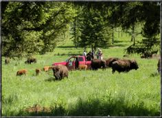 Guests out in the field with the Buffs