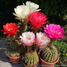 Varios cactus (780×780)