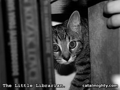 The Little Librarian  The truth about cat wisdom has been revealed. Now, it is clear where cats gather all their wisdom and knowledge. They secretly read books when you sleep.