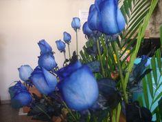 Y En el inicio de Semana aqui te estan esperando nuestras bellas Rosas Azules. Feliz inicio de Semana queridos amigos bendiciones.