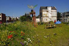 A beautiful temporarily garden and meeting spot in Afrikaanderwijk Rotterdam, in-between city renovation plans