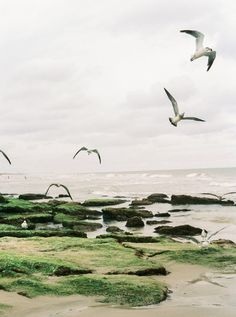 at the edge of the sea | Perry Vaile Photography