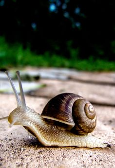 Types Of Animals, Animals And Pets, Cute Animals, Pet Snails, Creatures 3, Beautiful Bugs, Bugs And Insects, Natural History, Cute Babies