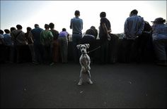 Animals & Street Photography - An Ultimate Collection - 121Clicks.com