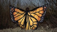 butterfly wings 1