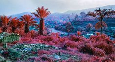 Louisiana Museum of Modern Art || Exhibition: Richard Mosse ~ The Enclave || until 25.05.2015 https://stomouseio.files.wordpress.com/2015/02/hombo-walikale_press.jpg