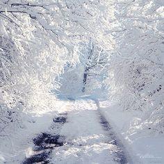 Winter Wonderland❄️⛄️