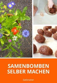 Samenbomben selber machen | eatsmarter.de
