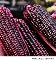 Beautiful purple corn