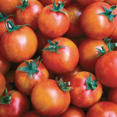 Isis Candy Cherry Tomato - Seed Savers Exchange