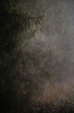 The dark woods at night. I'm not afraid, are you? ~ETS #darkwoods #intothewoods #woodsatnight #notafraid
