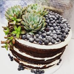 Naked Chocolate Cake Succulents Blueberries Avalon Hotel Palm Springs