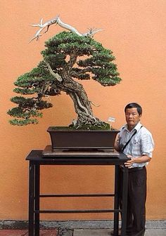 China bonsaï | Now THAT's the bee's knees; a bonsai tree at one's own height. Love it!