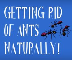 29 best ants in house images in 2019 tips tricks cleaning ants rh pinterest com