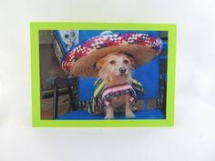 Dog Photo Greeting Card Humor by lillyzcardz on Etsy, $4.00